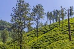 Jardins de thé d'Ooty au domaine de thé Photo libre de droits