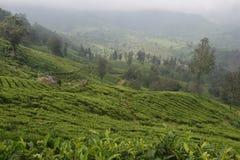 Jardins de thé dans l'Inde Image libre de droits