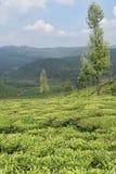 Jardins de thé dans l'Inde Images libres de droits