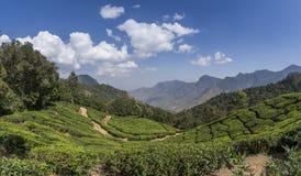 Jardins de thé dans Munnar, Kerala, Inde Photographie stock