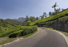 Jardins de thé dans Munnar, Kerala, Inde Image libre de droits