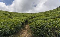 Jardins de thé dans Munnar, Kerala, Inde Photographie stock libre de droits