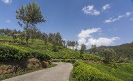 Jardins de thé dans Munnar, Kerala, Inde Image stock