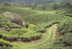 Jardins de thé de roulement en collines-Munnar brumeuses Kerala-Inde de Kanan Devan image stock