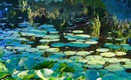 Jardins de Vandusen da lagoa de Waterlily fotografia de stock royalty free
