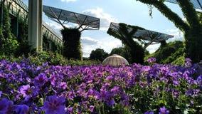 Jardins de Varsóvia imagem de stock royalty free