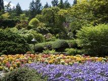 Jardins des fleurs de floraison Photographie stock