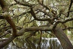 jardins do outono da água do parque das árvores foto de stock
