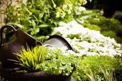 Jardins do verão Fotografia de Stock