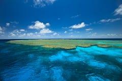 Jardins dos moluscos no grande recife de barreira Imagens de Stock Royalty Free