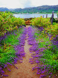 Jardins Escócia de Inverewe Foto de Stock
