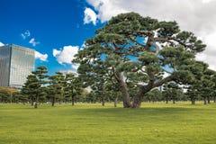 Jardins est de palais imp?rial ? Tokyo photos stock