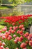 Jardins et lac de tulipe photos libres de droits