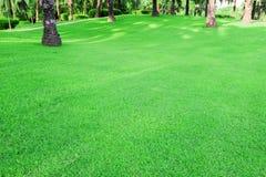 Jardins et palmiers verts dans une lumière molle photo libre de droits
