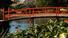 Jardins japoneses em Toowoomba vídeos de arquivo