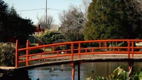 Jardins japoneses em Toowoomba video estoque