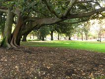jardins Melbourne de carlton de l'australie image stock