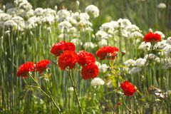 Jardins orgânicos Warwickshire midlands Inglaterra do ryton do ryton do jardim Fotografia de Stock