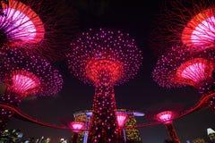Jardins par la baie avec la lumière la nuit, Singapour Images libres de droits