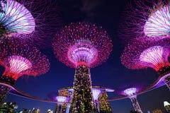 Jardins par la baie avec la lumière la nuit, Singapour Image libre de droits