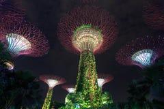 Jardins par la baie la nuit, Singapour Photographie stock libre de droits