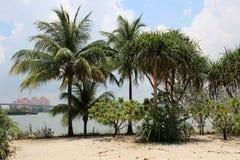 Jardins par la baie - Singapour Image libre de droits