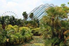 Jardins par la baie - Singapour Photographie stock libre de droits