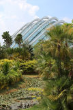 Jardins par la baie - Singapour Image stock