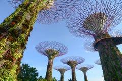 Jardins par le compartiment à Singapour photo stock