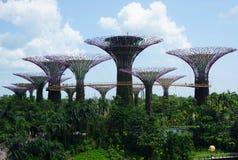 Jardins pela baía - Singapura Fotos de Stock