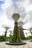 Jardins pela baía Singapura Fotografia de Stock Royalty Free
