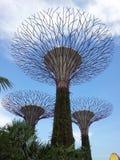 Jardins pelo GRAMADO E pela COLUNATA do BOSQUE da baía SUPERTREE em Singapura imagens de stock