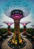 Jardins pelo louro Singapore foto de stock royalty free