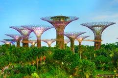 Jardins pelo louro, Singapore Fotografia de Stock Royalty Free