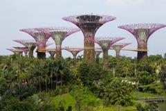 Jardins pelo louro Singapore Fotos de Stock