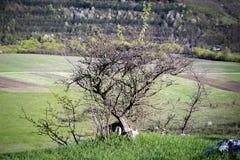 Jardins publics et verdure et sapin ornementaux de buissons Photographie stock