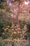 Jardins retros Imagem de Stock