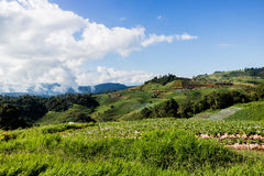 Jardins sur la montagne Photographie stock
