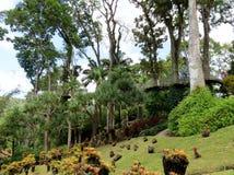 Jardins tropicais exóticos Fotografia de Stock Royalty Free