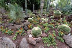 Jardín botánico con el cactus Imágenes de archivo libres de regalías