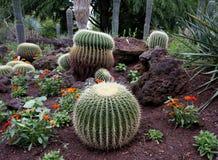 Jardín botánico con el cactus Imagen de archivo libre de regalías