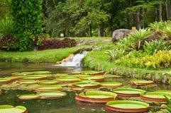 Jardín botánico en Río de Janeiro Imagen de archivo