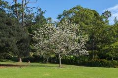 Jardín botánico Sydney Fotos de archivo libres de regalías