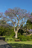 Jardín botánico Sydney Imagen de archivo