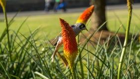 Jardín botánico Sydney Foto de archivo libre de regalías