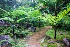 Jardín cerca de la cascada de Siriphum Imagen de archivo libre de regalías