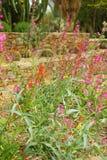 Jardín de Cactoo Fotografía de archivo