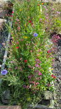 Jardín de flor salvaje Fotos de archivo