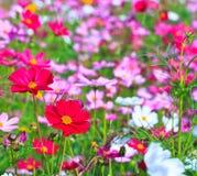 Jardín de flores Fotos de archivo libres de regalías