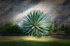 Jardín de flores de la planta del estilo del cactus Imágenes de archivo libres de regalías